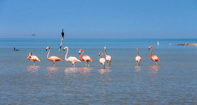 Flamingos im Winter