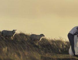 Brautpaar in den Dünen mit Schafen