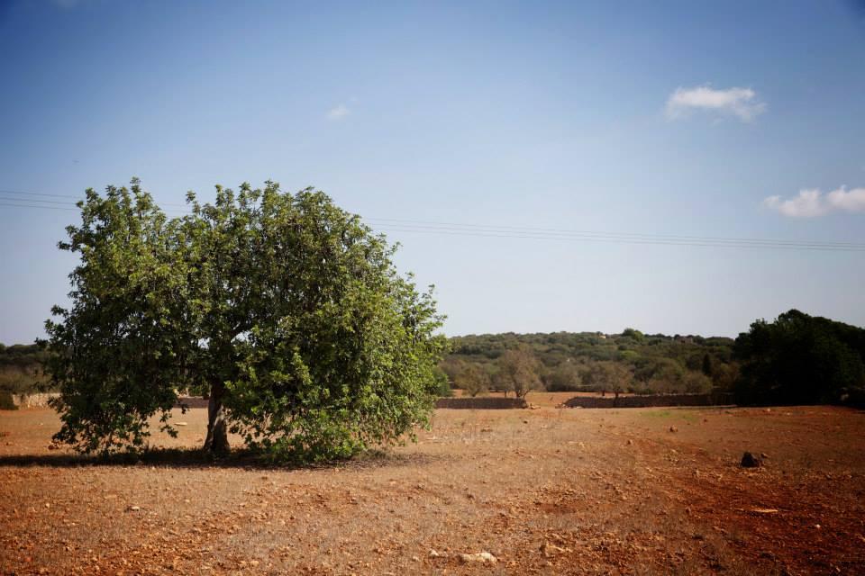 Landschaft Mallorca Ses Salines