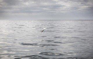Ein Seevogel über dem Südpazifik