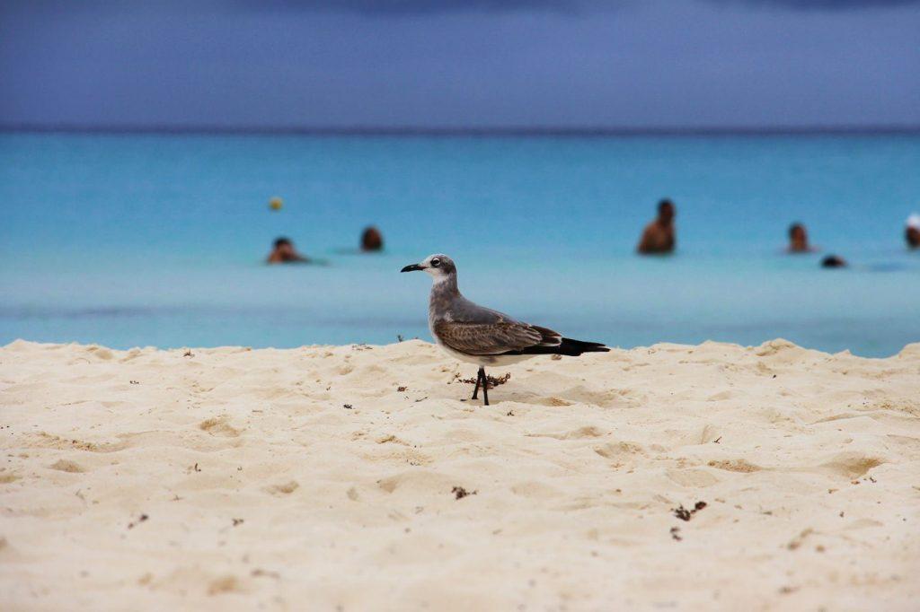 Möwe am Strand von Yucatan