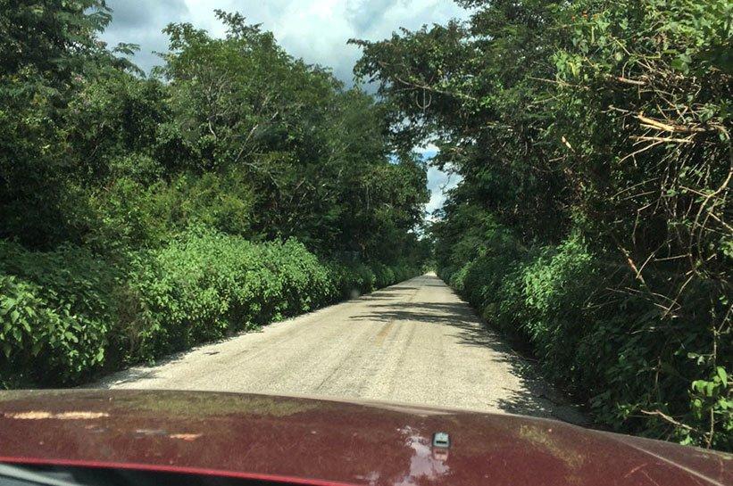 Yucatan Dschungel
