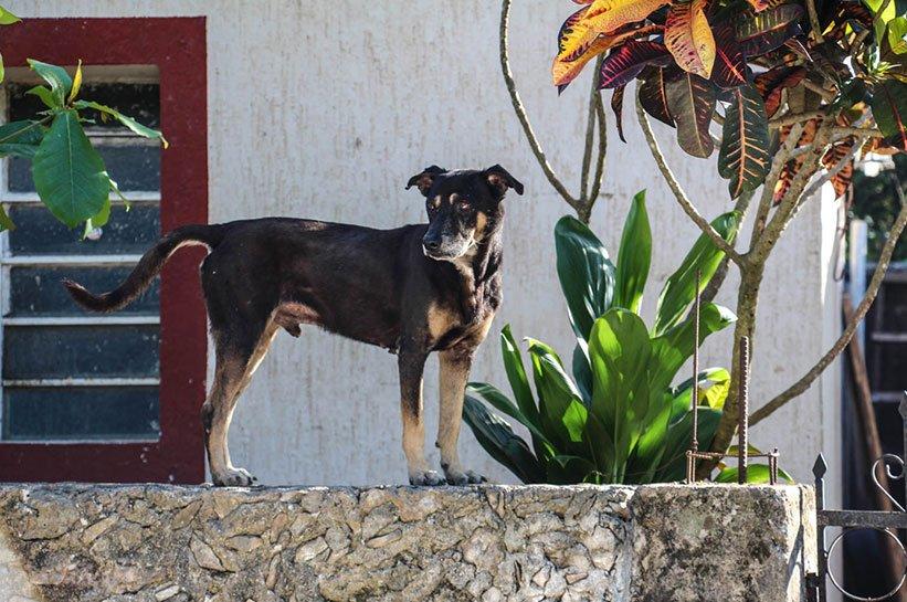 Hund Mexiko