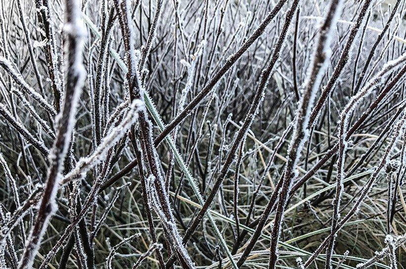 Eis am Dünengras
