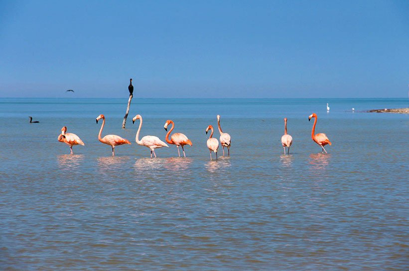 Flamingos Mexiko