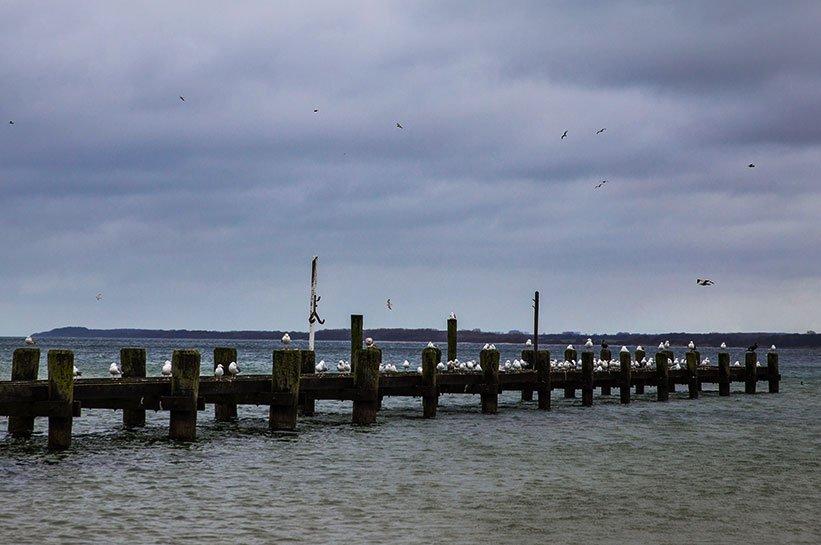 Moewen an der Ostsee