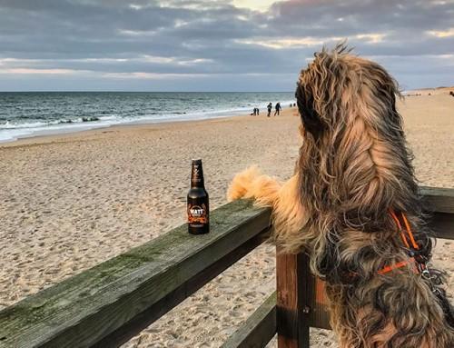 Sylt mit Hund – Tipps und Empfehlungen