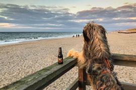 Sylt mit Hund Restaurants