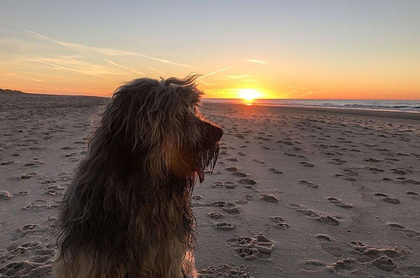 Insel Sylt mit Hund