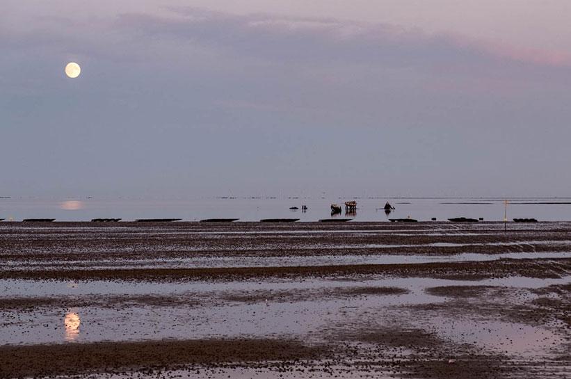 Die Seekühe in List auf Sylt