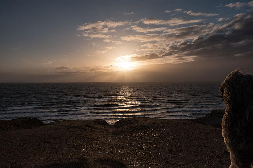 Rotes Kliff Kampen Sonnenuntergang mit Hund