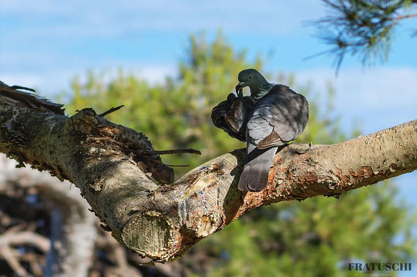 Can SImoneta Vögel im Garten