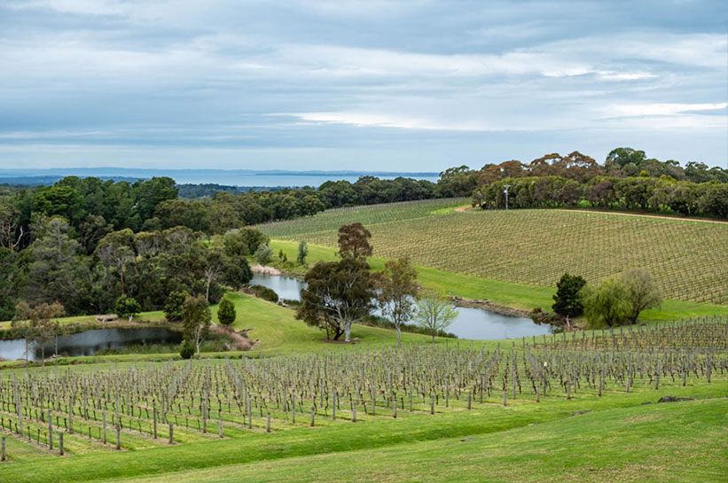 Weingut Mornington Peninsula nahe Melbourne