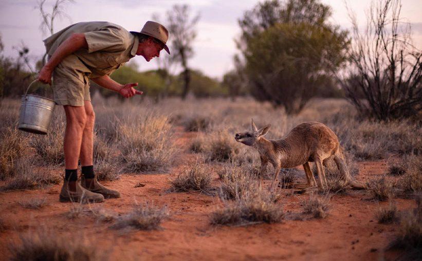 Kangaroo Sanctuary Alice Springs Chris und Kangaroo