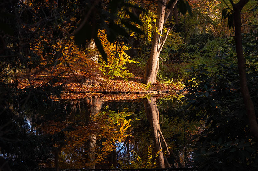 Berlin Tiergarten Park