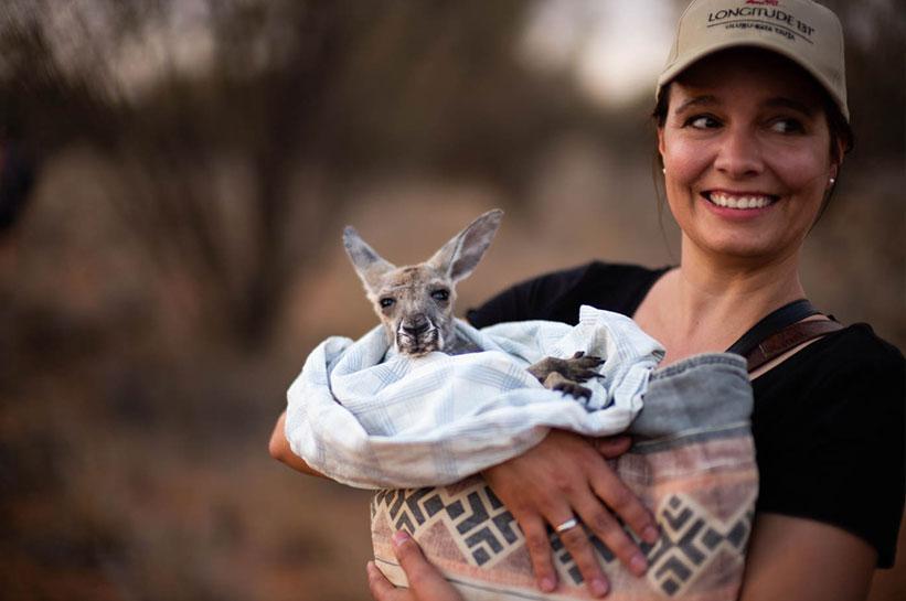 Kangaroo Cuddles Alice Springs