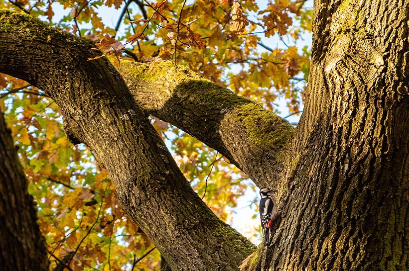 Tiergarten Berlin Vogel