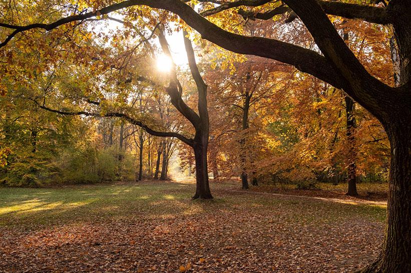 Berlin Tiergarten Herbststimmung