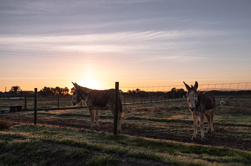 Urlaub im November - Esel im Alentejo