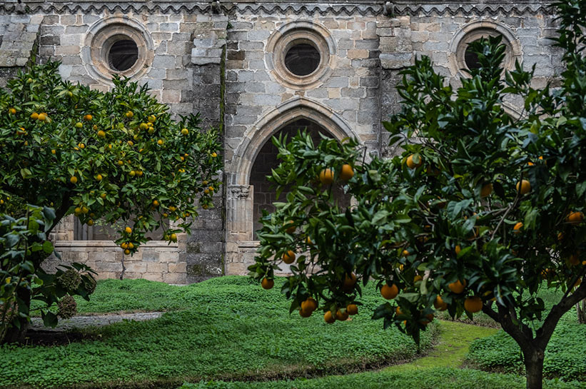 Evora Orangenbäume