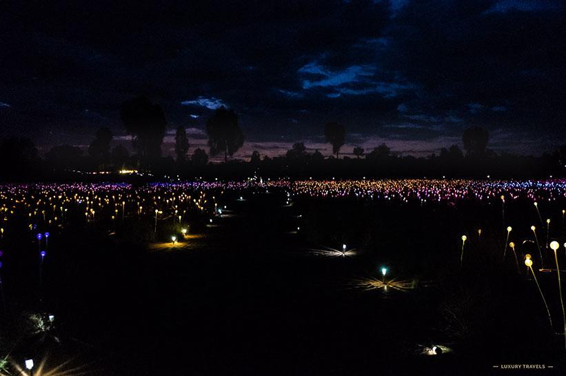 Weg Field of Light