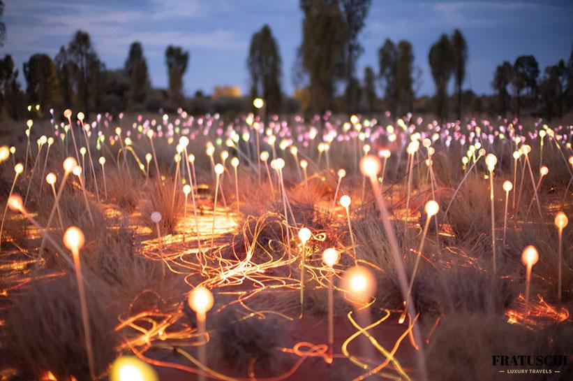 Field of Light Tour am Uluru
