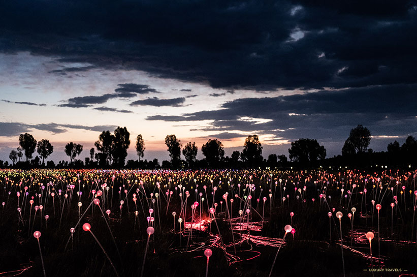 Field of Light Australia Northern territory
