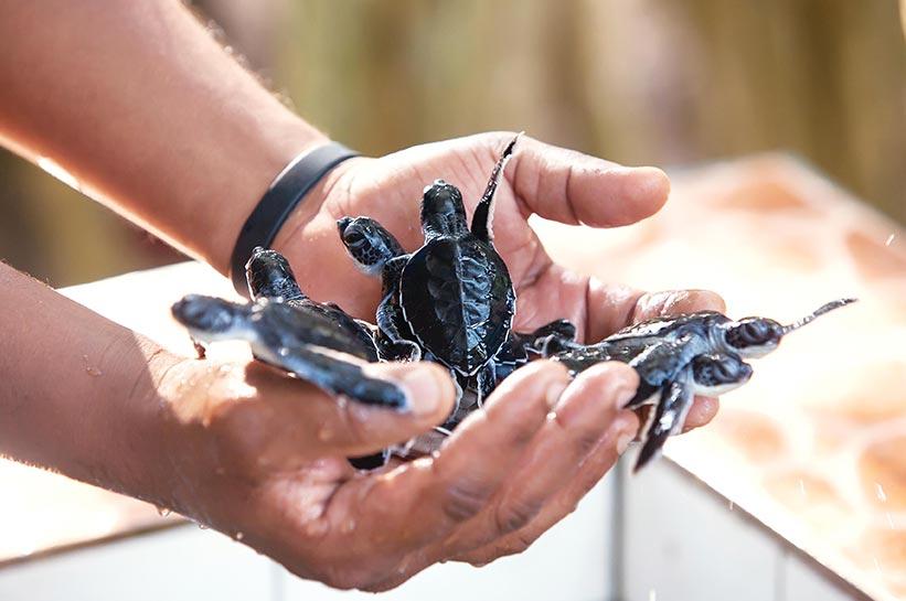 Die schönste Insel der Welt ist stark im Naturschutz: Meeresschildkröten