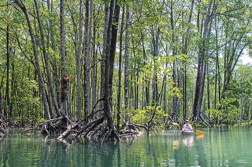Mangrovenwälder auf der schönsten Insel Asiens