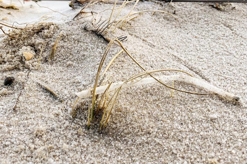 Strohhalm am Strand