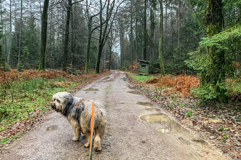 Pausen beim Autofahren mit Hund