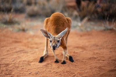 Australien Reiset