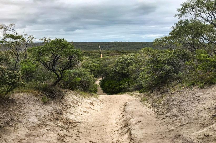 Boranup Weg zu den Karri Wäldern