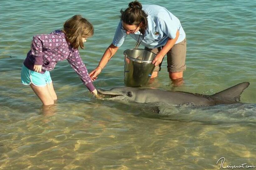 Delfine füttern Monkey Mia