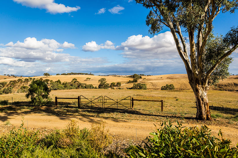 Barossa Valley Landschaft