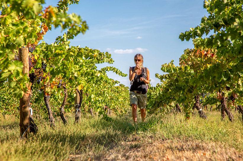 Weinfelder Murray Australien
