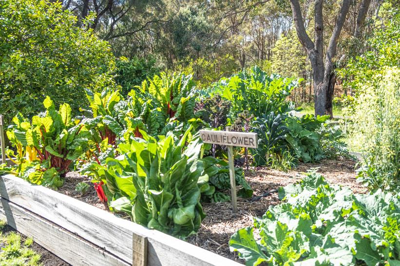 Bio Garten Australien