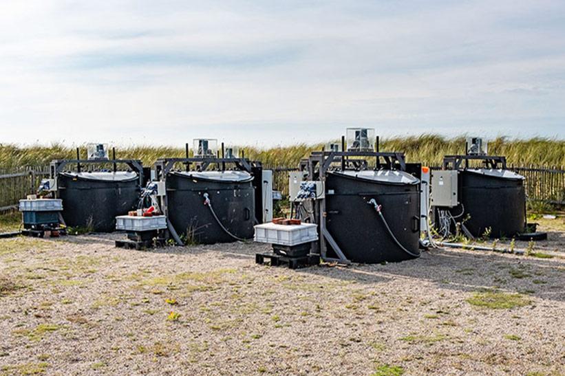 Wattenmeer Forschung in Tanks auf dem Außengelände