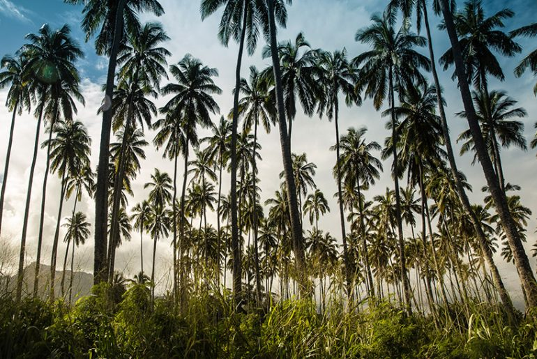 Hawaii Kauai Palmen Panorama