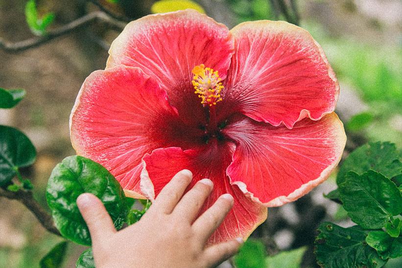 Tipp für Familien Urlaub auf Hawaii: Botanischer Garten