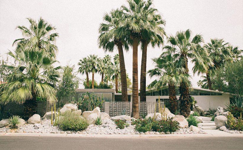 Palm Springs mit Kindern: Palmen ums Haus