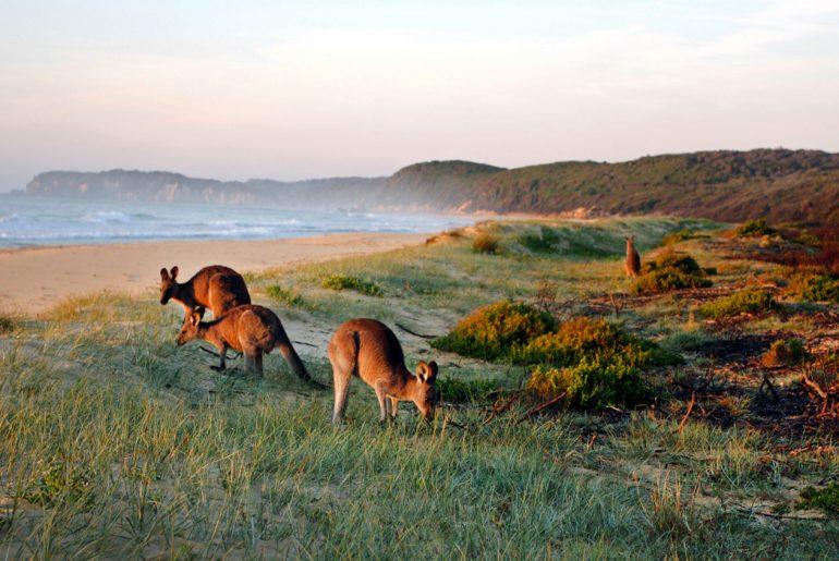 Reisequiz Australien