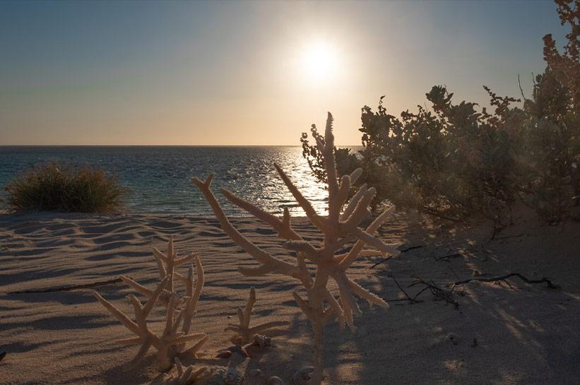 Sonnenuntergang Sal Salis Strand /Corals at Ningaloo