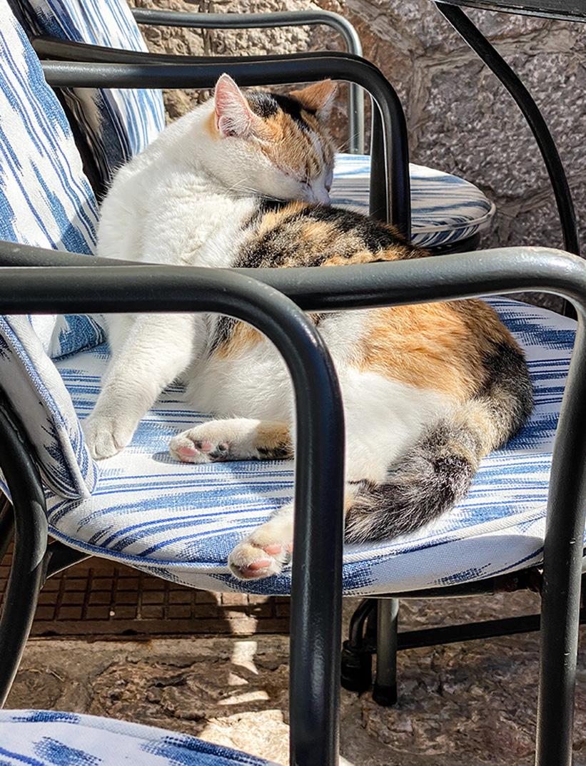 Urlaubsfeeling pur: Katze Mallorca