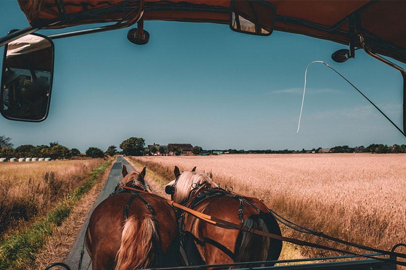 Aktivitäten mit Pferden auf Sylt