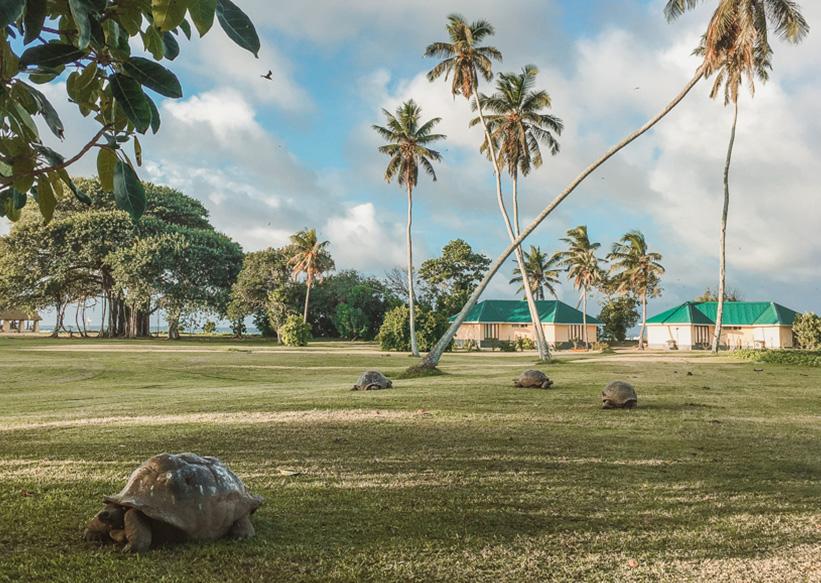 Seychellen Schildkröten