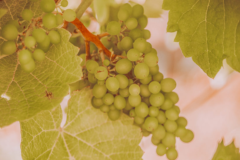 Sylter Wein in Keitum