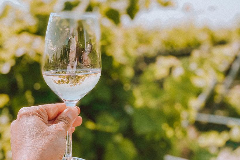 Solaris Wein Sylt